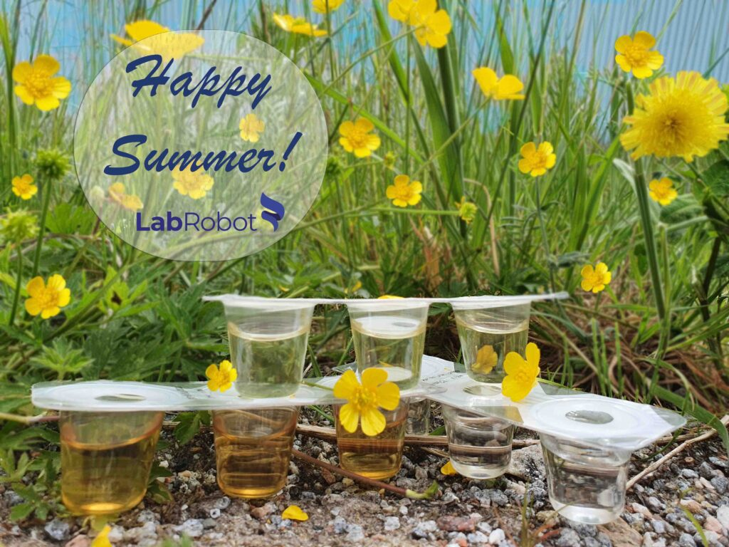 dilucup summer